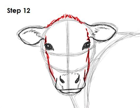 how to a cow how to draw a cow
