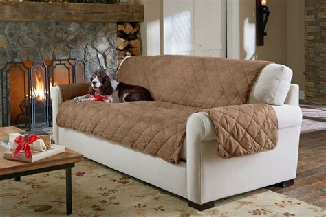 dog friendly couches pet friendly sofas 15 dog friendly couches perfect for