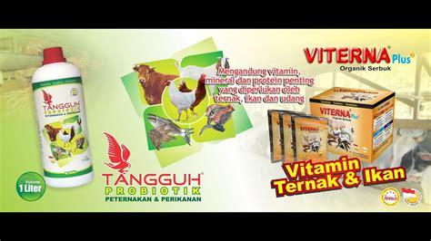 Farmentasi Pakan Ternak Tangguh Probiotik nasa blitar cara membuat fermentasi gedebog pisang dengan tangguh probiotik nasa