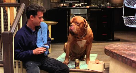 what of is turner and hooch turner hooch proved tom hanks could act opposite anyone the dissolve