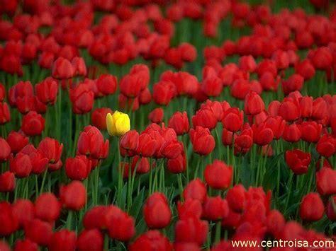 foto fiori sfondi fiori centro isa