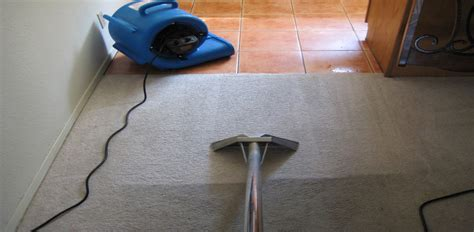 upholstery cleaning chaign il best ways to remove almost any carpet stain fox river