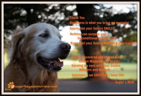 middle tn golden retriever rescue golden retriever thanksgiving pictures merry photo