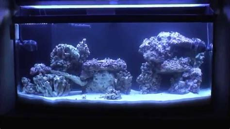 aquascape live rock live rock aquascape youtube