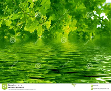 Free Images Tree Water beautiful oak tree and water royalty free stock images