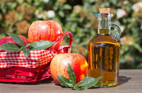 apple cider vinegar for fleas on dogs the amazing benefits of apple cider vinegar for dogs