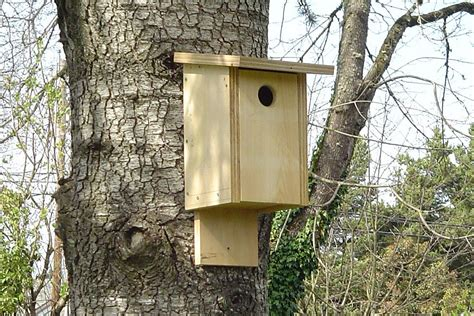 build your own bird house with a kit