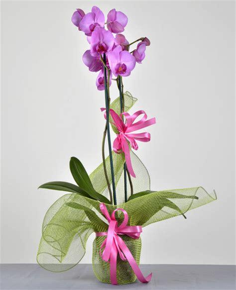 pianta da appartamento con fiori pianta da appartamento con fiori rosa comorg net for