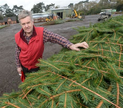 best place to buy a christmas tree near me best places to buy a tree near birmingham birmingham mail