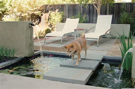 backyards for dogs 8 backyard ideas to delight your dog