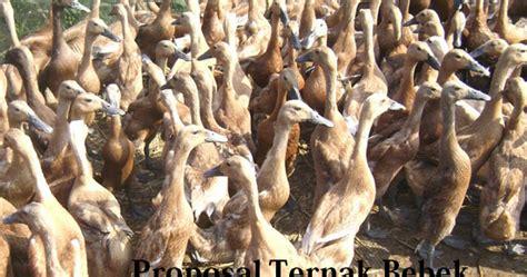 contoh surat perjanjian kerjasama usaha peternakan ayam 28 images