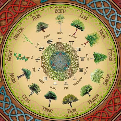 Celtic Tree Calendar When Trees Were Revered The Celtic Tree Calendar