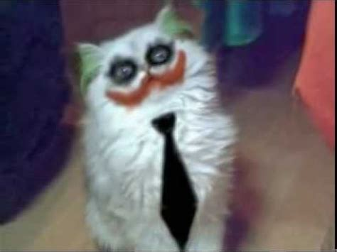 1452138923 how to be a cat joker cat youtube