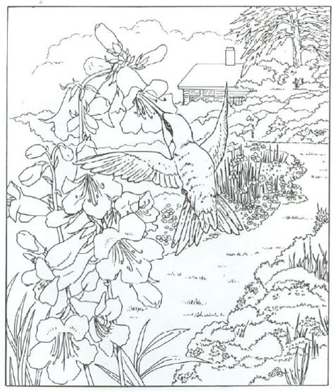 coloring pages hummingbirds flowers hummingbird pictures to print for free animals coloring