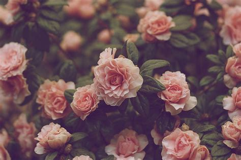 flower wallpaper aesthetic pin by chik chik 2 on aesthetic flowers and love pinterest