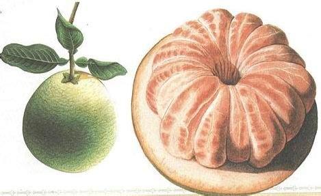 manfaat orgasme bagi wajah dan kesehatan wanita bimbingan manfaat jeruk bali bagi kehamilan