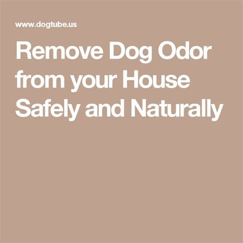 dog odor in house 1000 ideas about remove dog odor on pinterest brighten