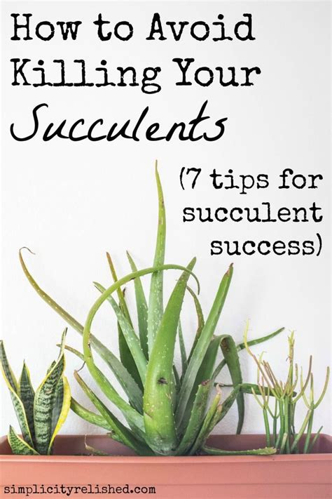 25 best ideas about indoor succulents on pinterest indoor succulent garden succulents and