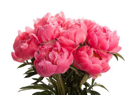Cattleya Peony bouquets ferrebeekeeper