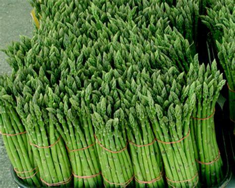 imagenes de esparragos verdes los beneficios de los esparragos