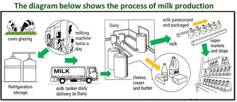 c section and milk production the process of milk production sle writing task 1