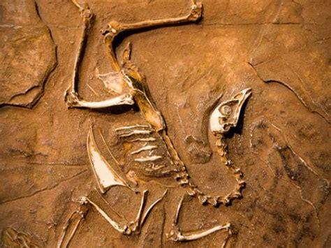 imagenes de fosiles f 243 sil