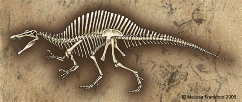 spinosaurus skeleton by mmfrankford on deviantart