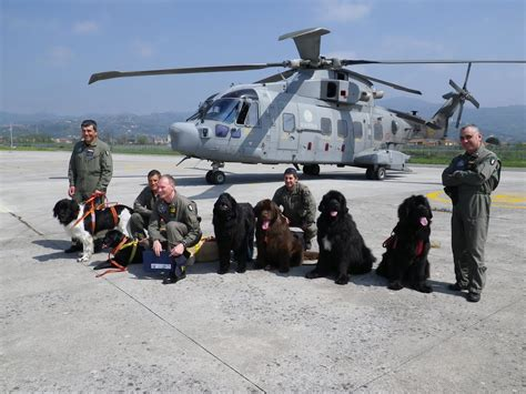 puppies rescued in italy meet the karazans real newfoundland water rescue work in italy part two