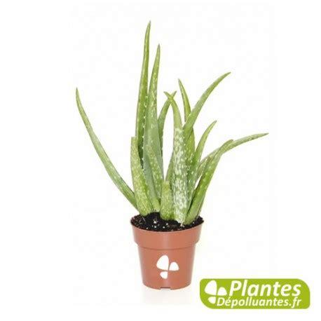 Aloe Vera Plante by Plante D Int 233 Rieur D 233 Polluante Alo 233 Vera