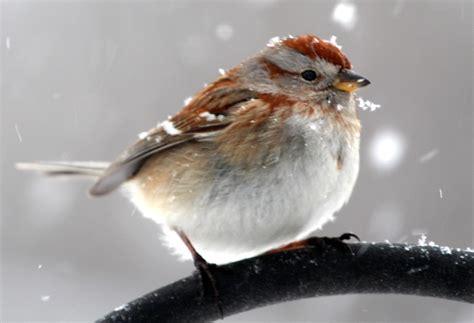 new england winter birds of new england