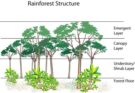 rainforest diagram weekend science birds of the forest growing