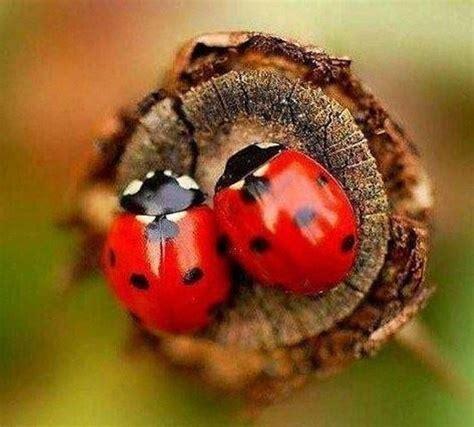 imagenes de lady bug para fondo de pantalla fondos de escritorio de catarinas mariquitas ladybug