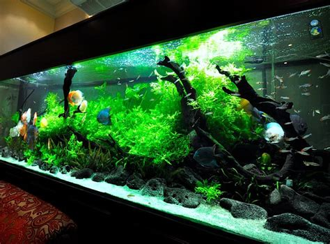 pics collection   inspired aquascape kinds