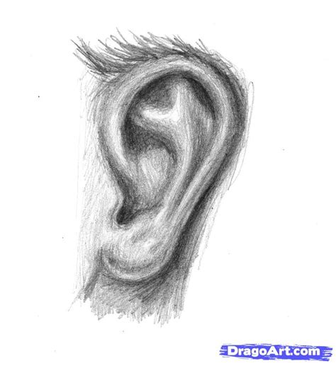 How To Draw Ear How To Sketch An Ear Step By Step Ears Free