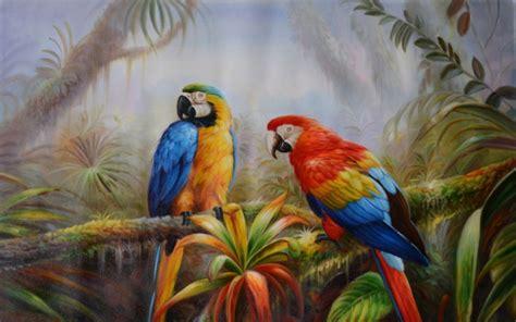 jungle parrot exotic birds pictures  hd wallpaper