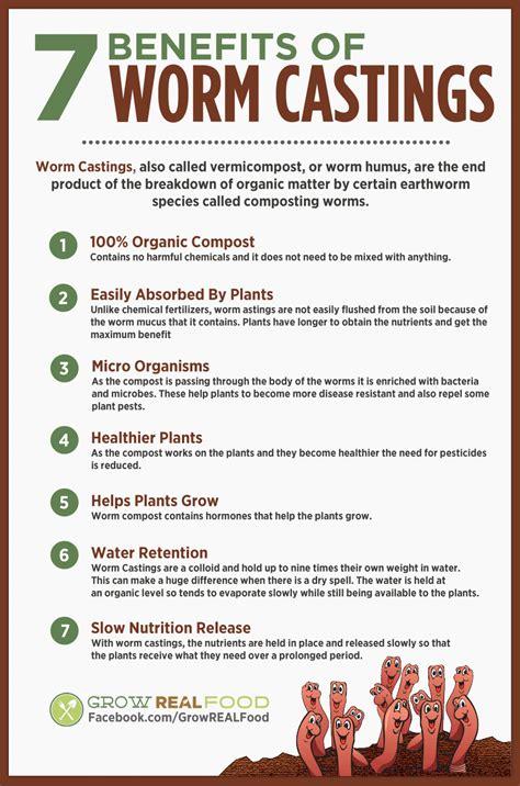 How to Make a Worm Bin   Grow REAL Food   Organic, Non GMO