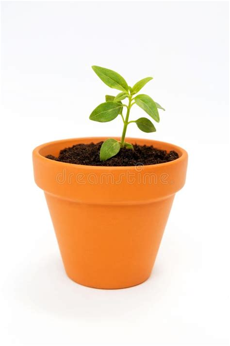 small flower pot a small flower pot and green plant stock photo image of