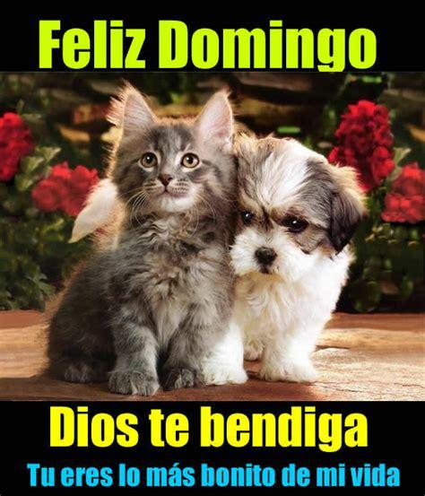 imagenes feliz domingo con animales imagenes de un bonito dia domingo hoymusicagratis com