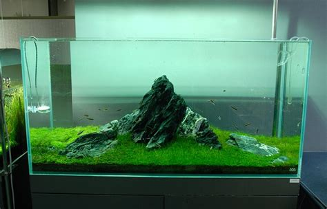 Amano Aquascape by Is Takashi Amano The Greatest Of All Time Even Today