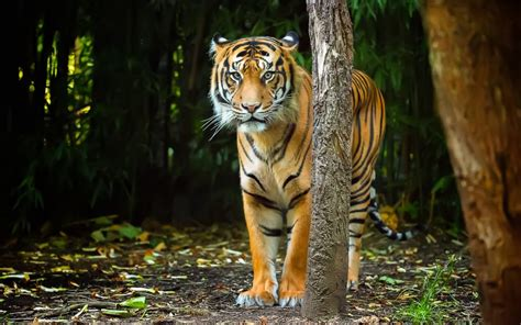 imagenes en 3d de tigres las mejores fotos de tigres naturaleza haciendofotos com