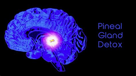 Pineal Gland Detox Foods by How To Detox Your Pineal Gland Fluoride Mercury And