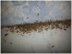 traitement punaise de lit sur quincy sous senart 91480