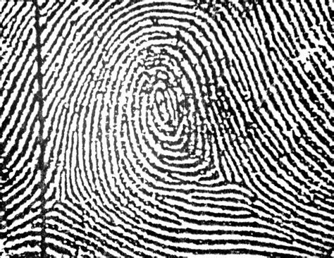 fingerprint pattern meaning fingerprints forensics with cogswell at pinckney