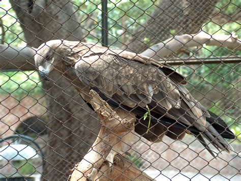 Zoo Search Lahore Zoo Images Search