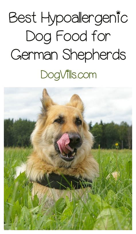 best food for german shepherds best hypoallergenic food for german shepherds dogvills