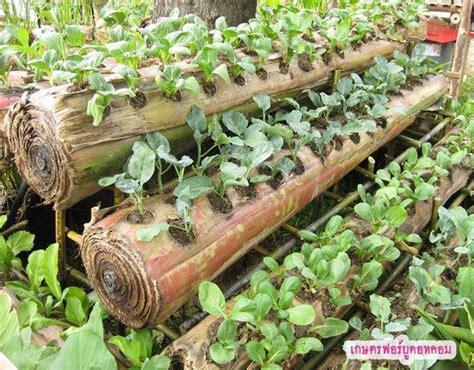 Furadan Alami vertikultura sayuran agriculture