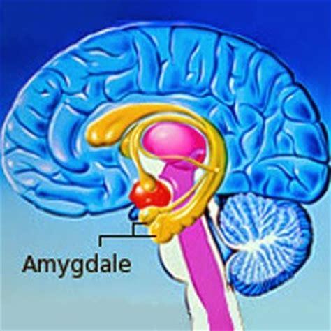 cerebro adolescente el cerebro de ni 241 os y adolescentes el cerebro del adolescente