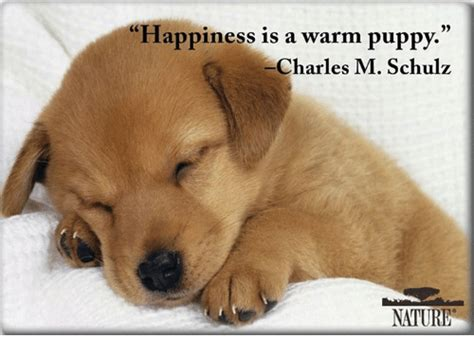 happiness is puppies happiness is a warm puppy charles m schulz nature meme on sizzle