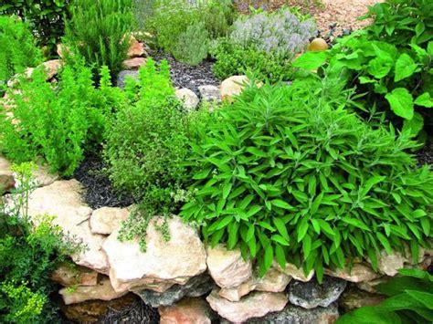 plantas para jardines plantas para jard 237 n mediterraneo