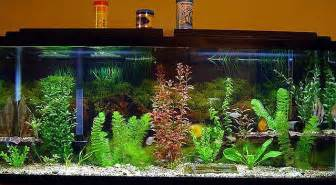Small Tanks (20 gallons and smaller)   Tropical Fish Forum . Net